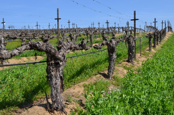 March 2014 Vines