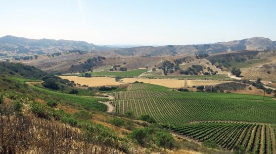 A vineyard view of the Santa Rita Hills.